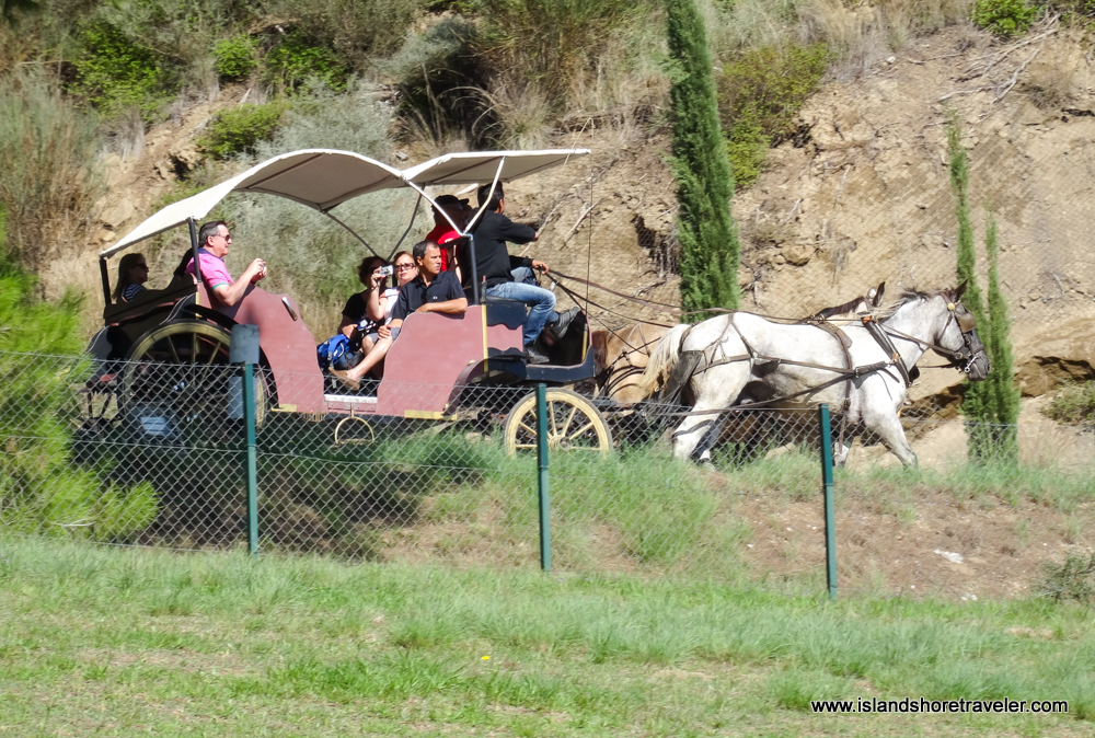 Horse and Carriage Ride around Ancient Olympia site