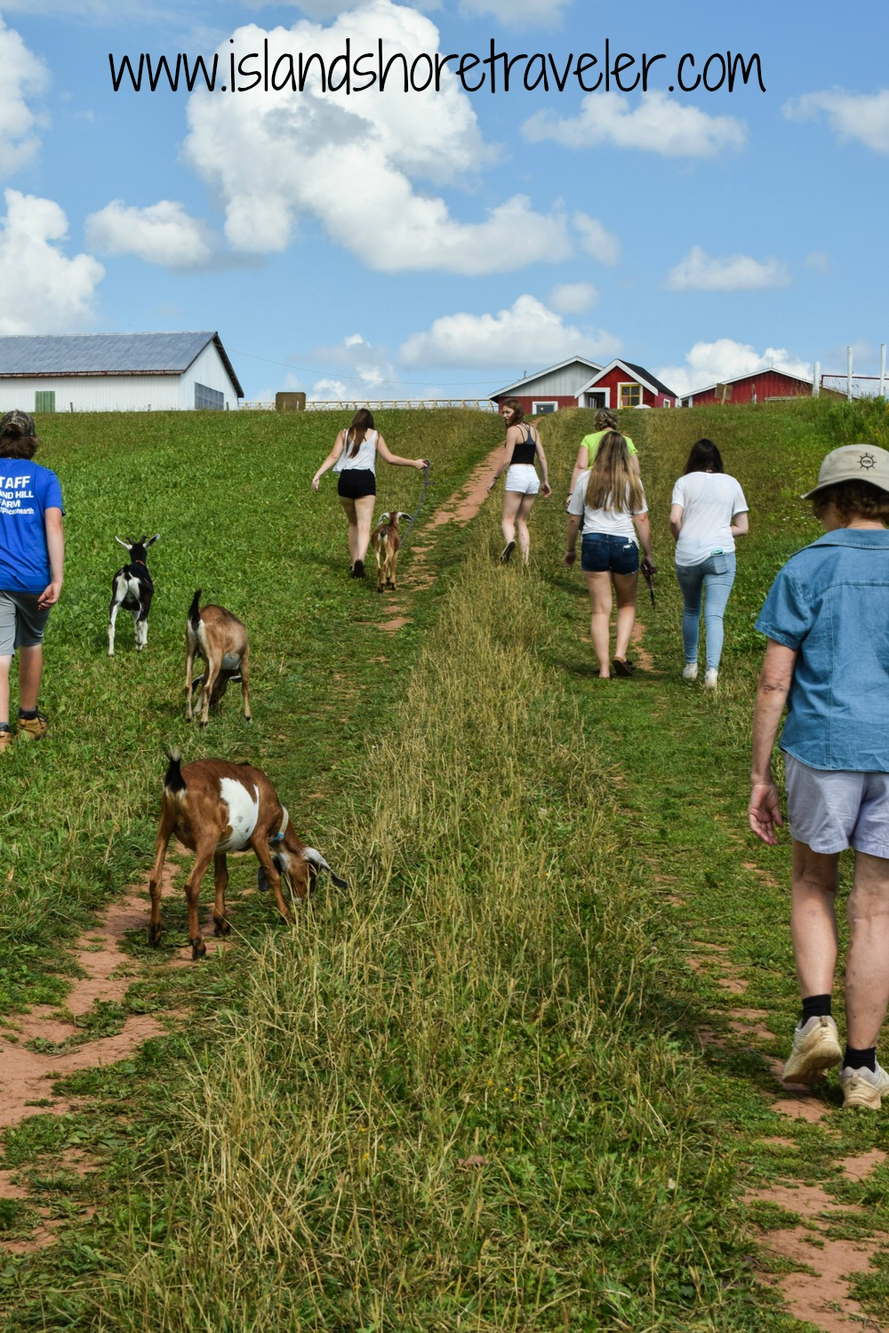 Heading back to the farm from the goat walk at Island Hill Farm, PEI